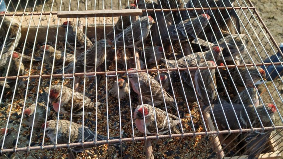 Воронежские зоозащитники спасли 230 птиц в Благовещение