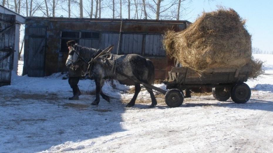 В Нижнедевицком районе недокармливают коров