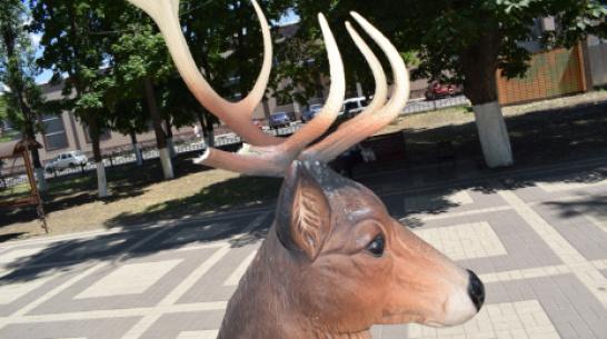 В Борисоглебске неизвестный парень сломал рога декоративному оленю в парке