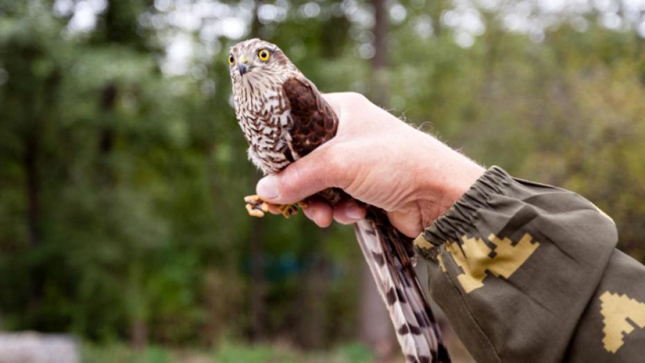 Работники Воронежского заповедника спасли застрявшую вфорточке птичку