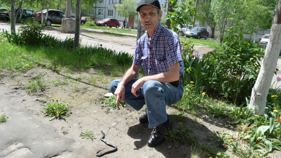 Житель Борисоглебска убил гадюку около подъезда многоэтажного дома