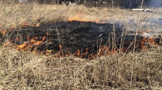 Под Воронежем огонь выжег 30 га сухой травы