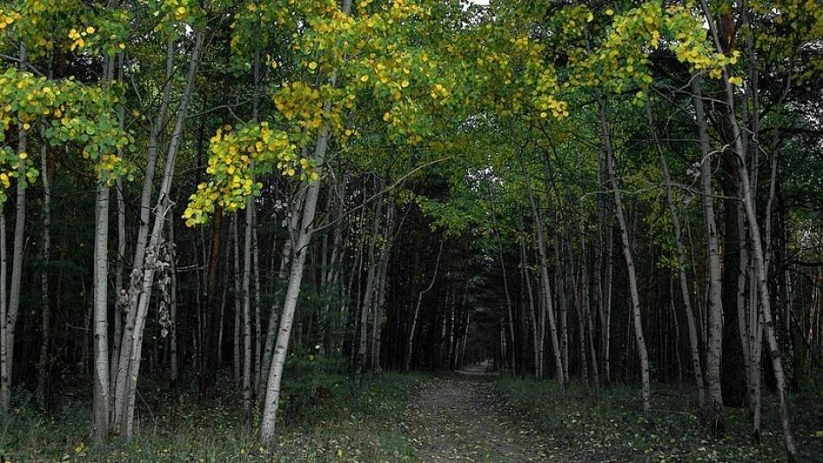 В Воронежской области 16-летнюю девушку нашли повешенной в лесу