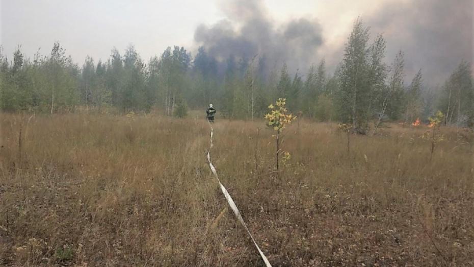 Пожар на полигоне «Погоново» в Воронежской области ликвидировали