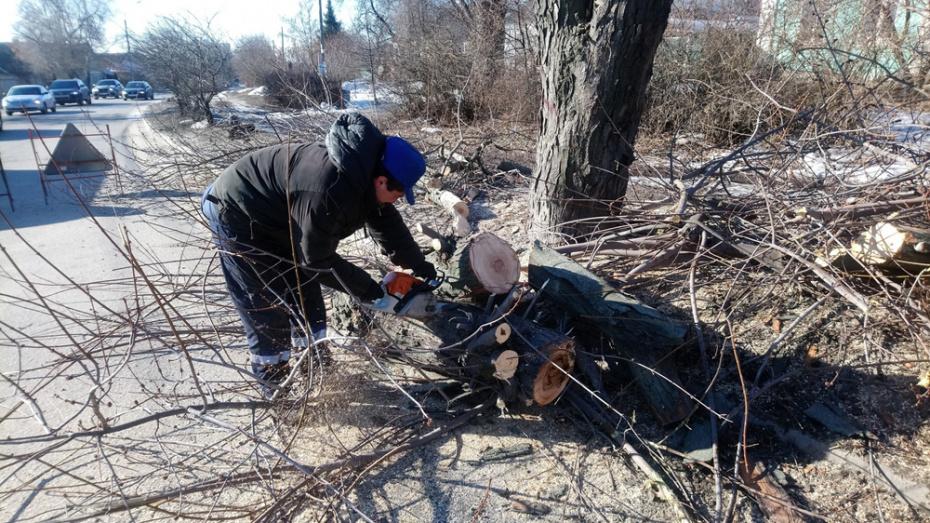 В центре Воронежа за 2 месяца спилят 189 деревьев