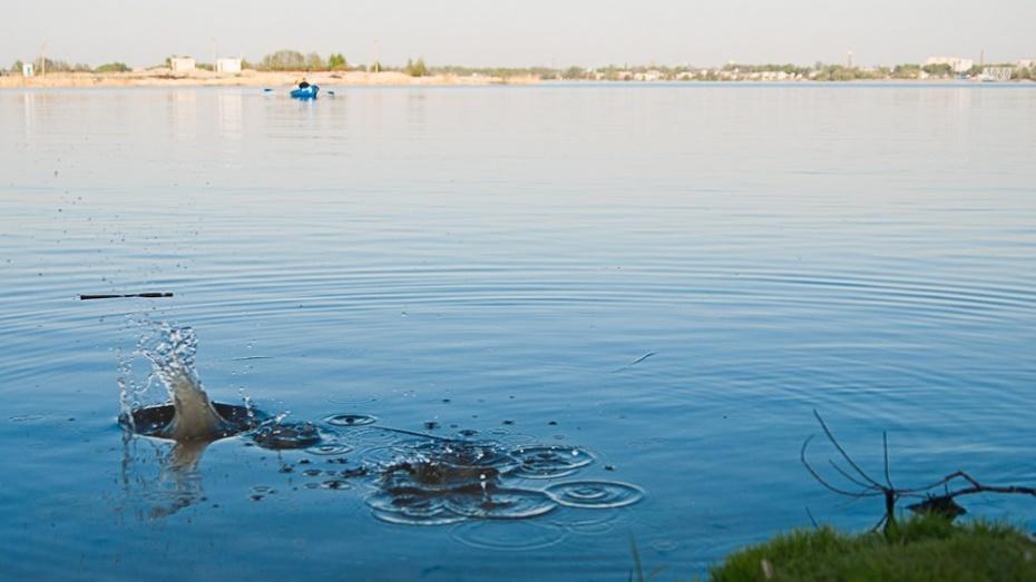 В Воронежское водохранилище выпустили 9 тонн малька толстолобика
