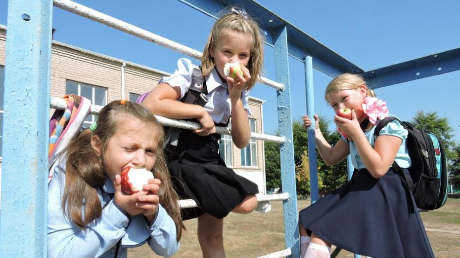 Кантемировские школьники бесплатно получат мед и яблоки