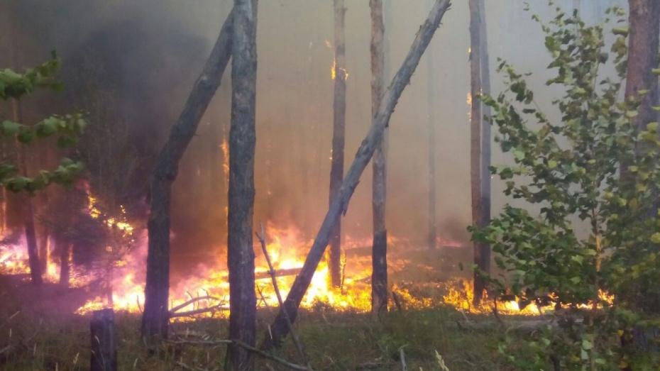 Пожарные ликвидировали открытый огонь в лесу на окраине Воронежа