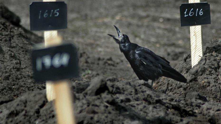 В Воронеже 20% могил остались заброшенными