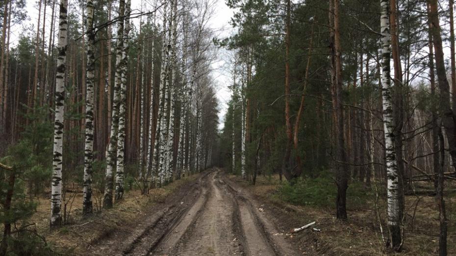 В лесополосе Панинского района нашли тело 44-летнего мужчины