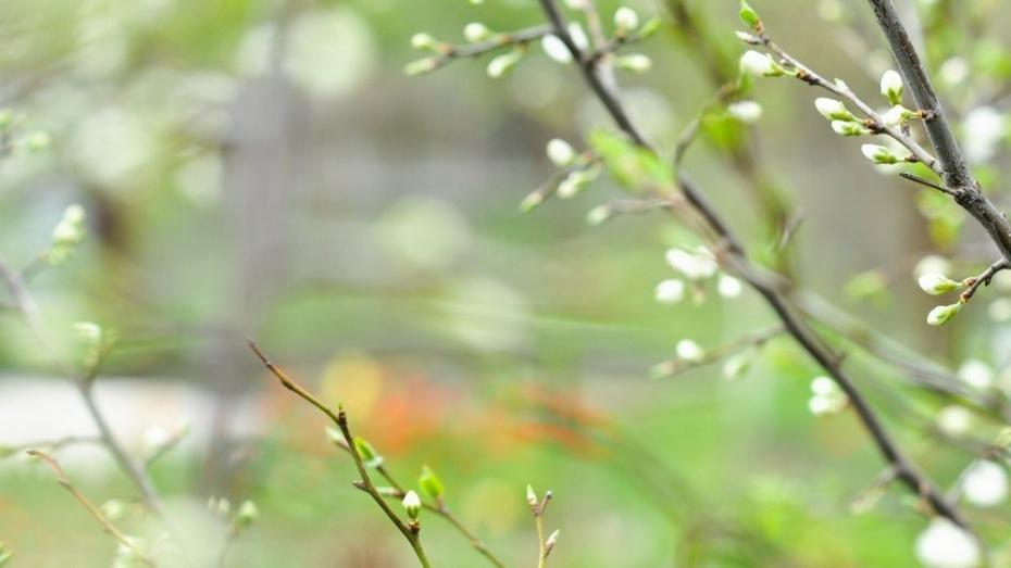 Воронеж озеленят за 2 млн рублей