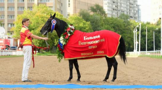 Ольховатский жеребец стал победителем Большого Всероссийского приза