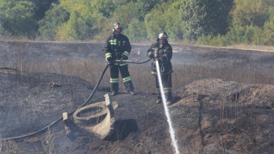 Площадь тления ила на бывших очистных сооружениях в Воронеже составила более 3 га
