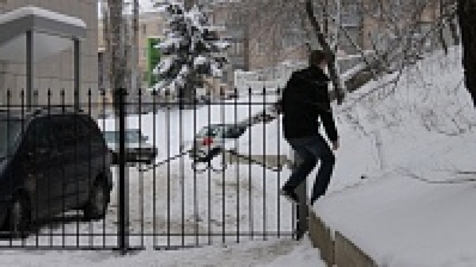 Мэрия Воронежа потребовала у бизнес-центра демонтировать забор на Арсенальной