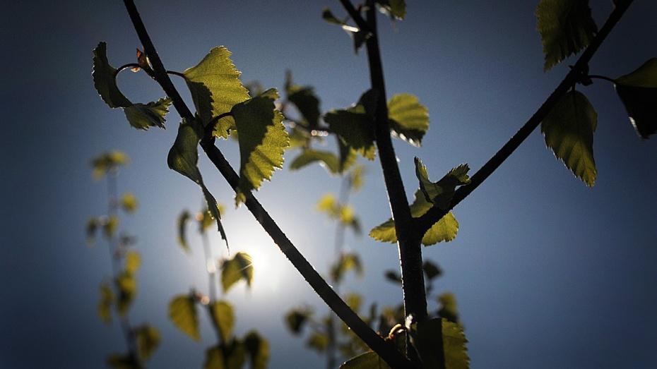 Воронежские власти привлекли к лесоустройству средства частных компаний