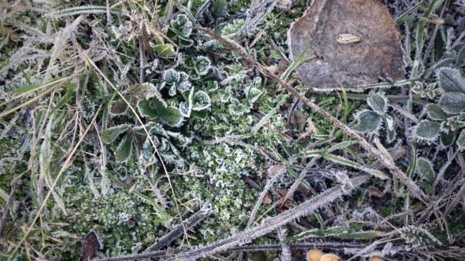 Внимание, заморозки: МЧС предупредило воронежцев о стремительном похолодании