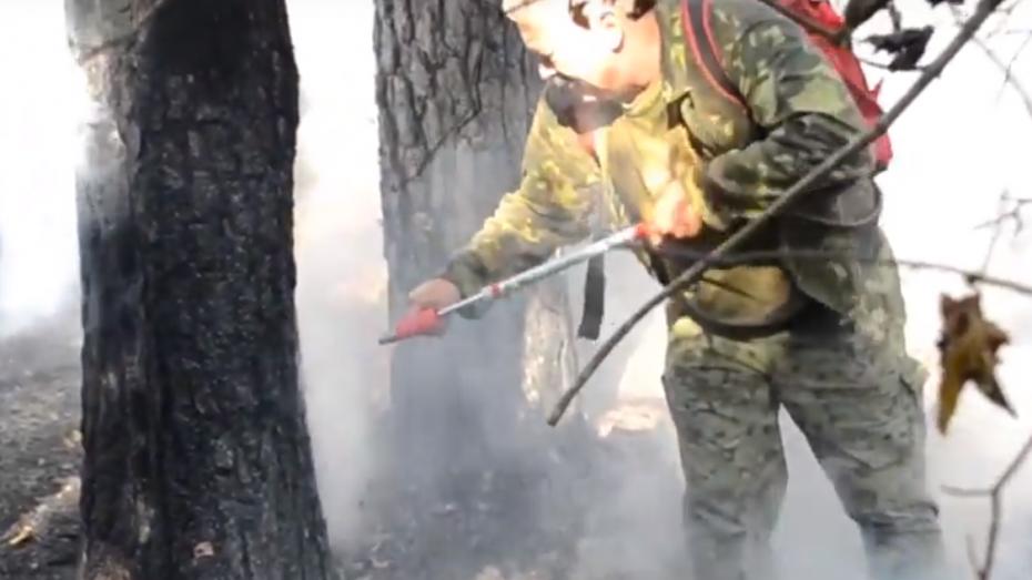 Пожар в Воронежском заповеднике попал на видео