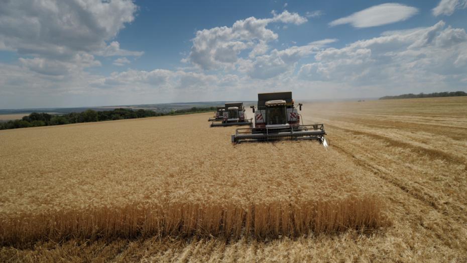 Воронежские аграрии 4-й раз в истории преодолели планку в 5 млн т собранного зерна