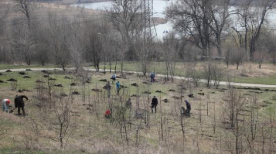 В Каменке в ландшафтно-парковом досуговом центре высадят около 1 тыс деревьев