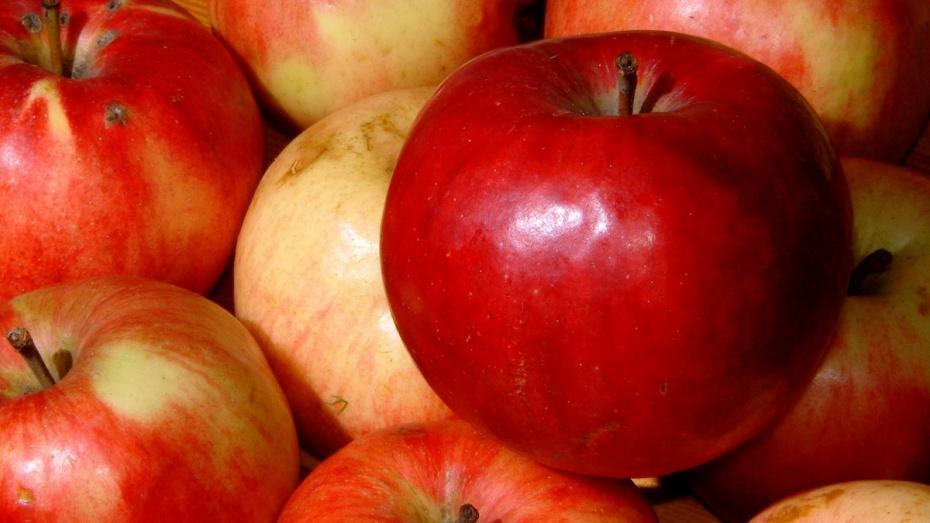 Россельхознадзор в Воронежской области задержал 460 кг овощей и фруктов с Украины
