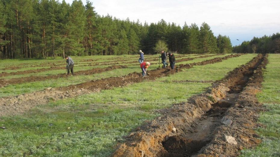 В петропавловском селе Пески посадили черешневый сад