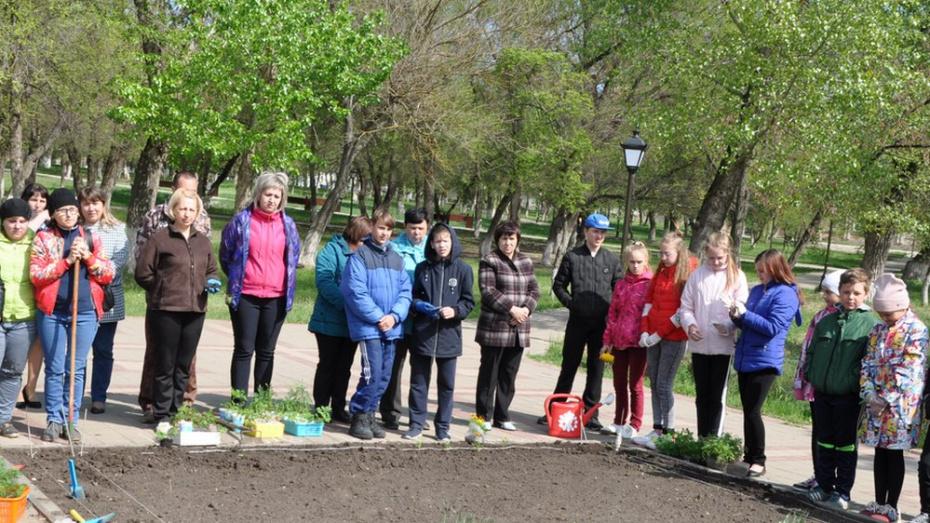В Павловске посадили 2 тыс бархатцев в рамках акции «Цветы Победы»