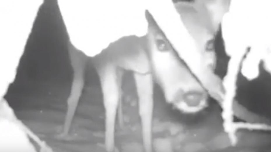 В Воронежском заповеднике показали реакцию животных на видеокамеры