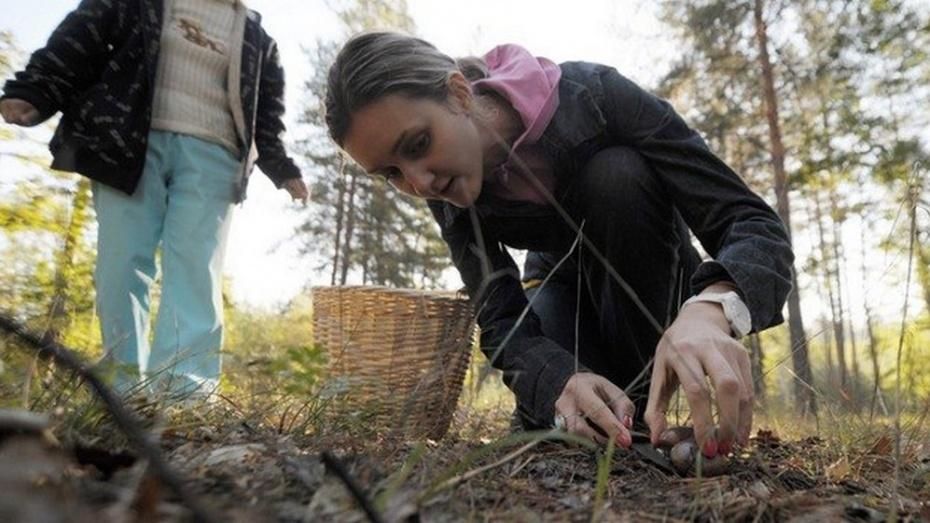 В грибановском селе отравились грибами 3 человека