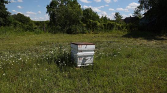 Под Воронежем начинающий пчеловод украл ульи у опытного коллеги