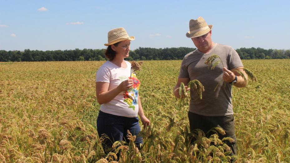 Ученые Воронежской области вывели 4 новых сорта зерновых культур