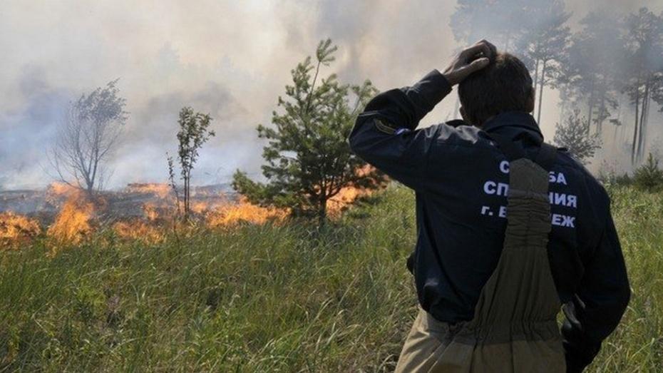 Под Рамонью все выходные бушевали ландшафтные пожары