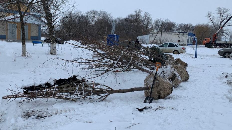 В районе Воронежской области в феврале начали высаживать деревья и кустарники