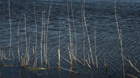 В Воронежской области рыбак утопил знакомого и спрятал в камышах