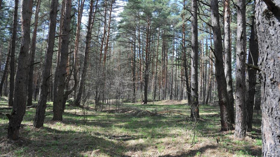 В Воронеже частные участки парка «Северный лес» могут передать в госсобственность