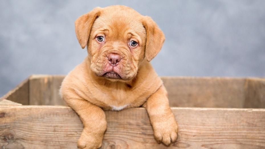 На выбросившего щенка с 5-го этажа воронежца завели уголовное дело