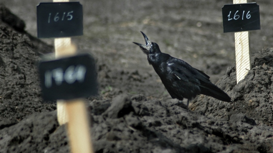 Воронежское похоронное бюро предупредило об осенней активности кладбищенских воров