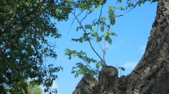 Доцент ВГУ прокомментировала «символ любви» из деревьев, выросший в Воронежской области