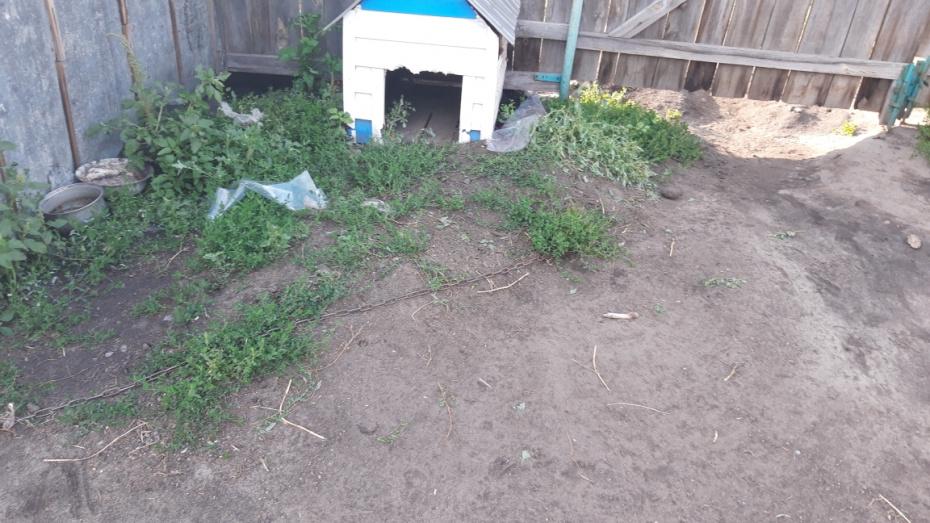 В Воронежской области возбудили уголовное дело о гибели малыша, которого загрызла собака
