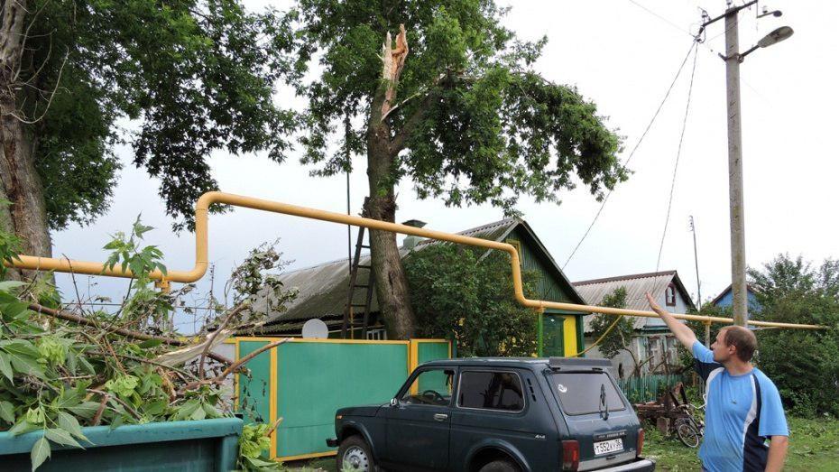 В Воронеже упавшее дерево повредило газопровод на улице Дубовая