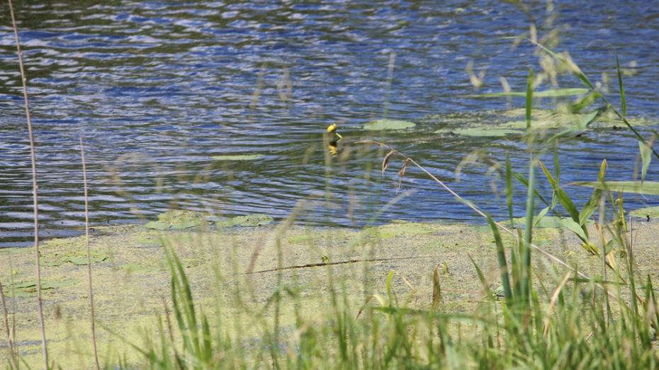 В Лисках в реке Дон спасатели нашли тело 59-летнего мужчины