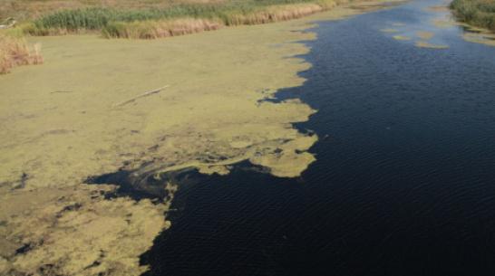 Ольховатские полицейские спасли провалившегося в болото 73-летнего пенсионера