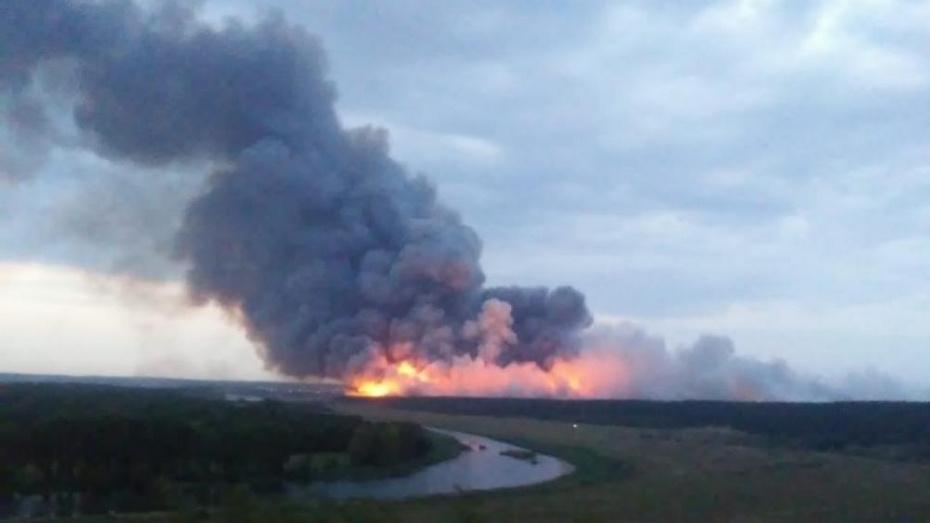 В Воронежской области выгорело 20 га лесного массива