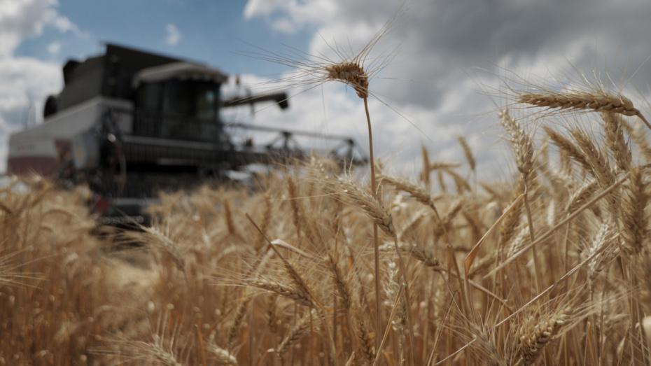 Аграрии Воронежской области собрали еще 1 млн тонн зерна менее чем за неделю