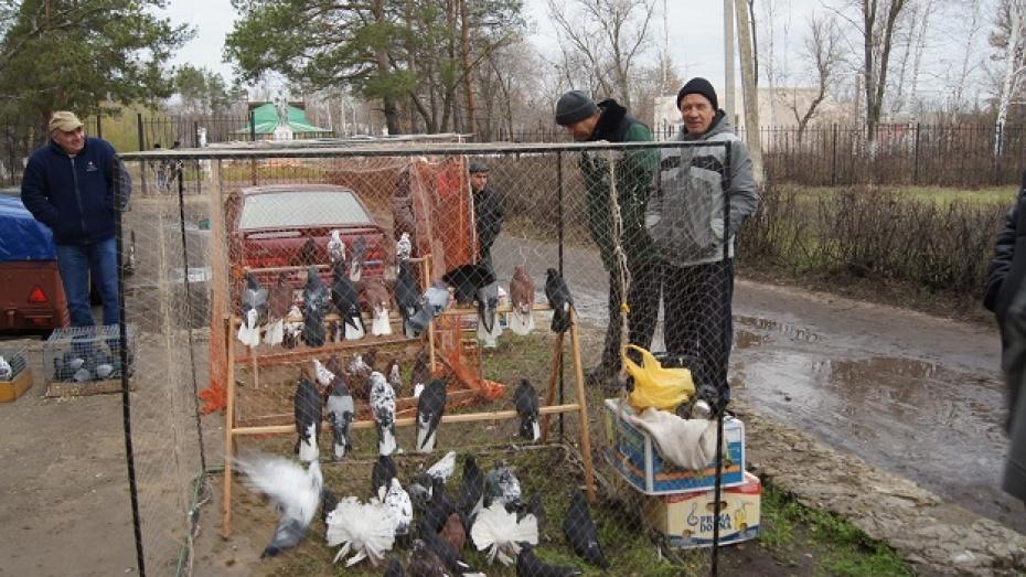 В Новохоперском районе прошла выставка голубей