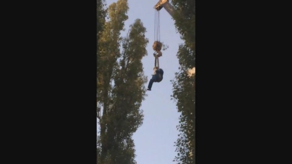 Воронежцы сняли на видео спасение при помощи автокрана застрявшего на дереве кота