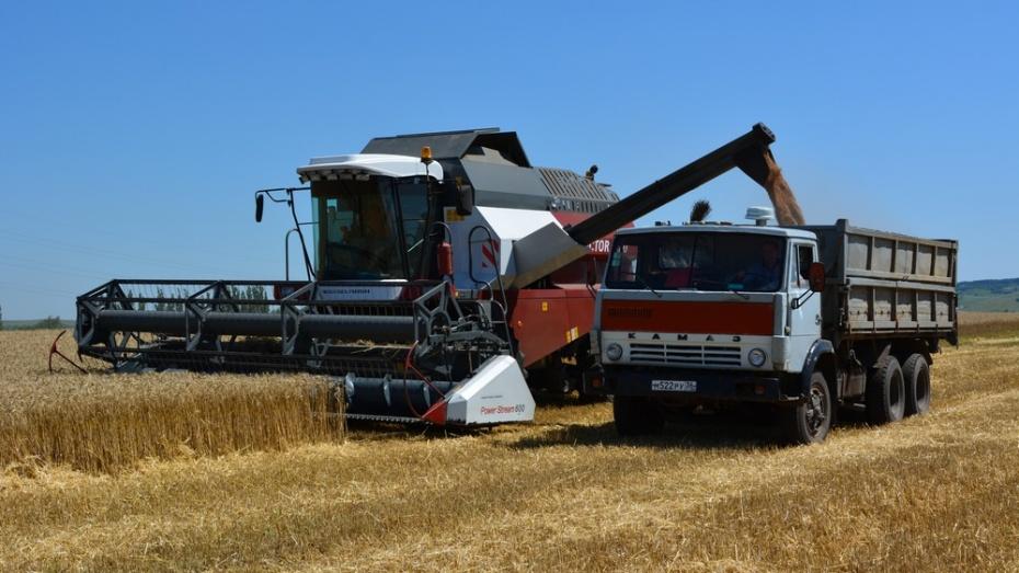 В Острогожском районе началась уборка ранних зерновых культур