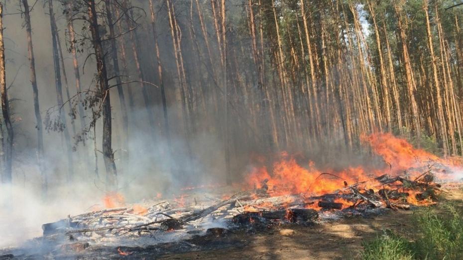В 9 районах Воронежской области установилась максимальная пожароопасность