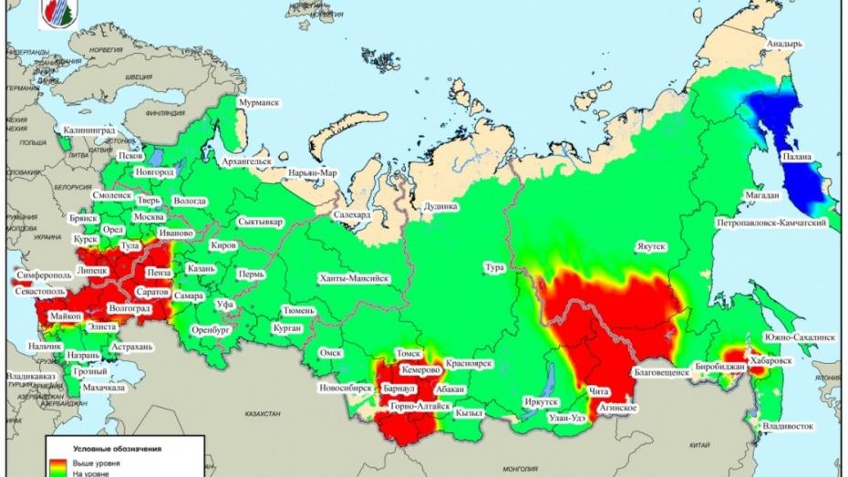 В Воронежской области спрогнозировали повышенную опасность пожаров в лесах в июне