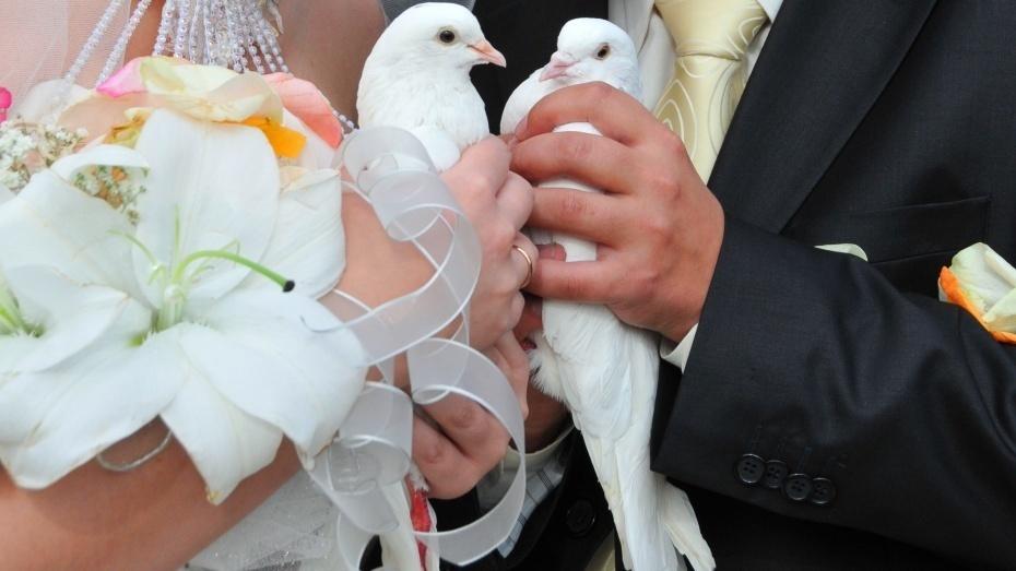 Свадебный бум: 580 пар изВоронежской области поженятся наКрасную горку