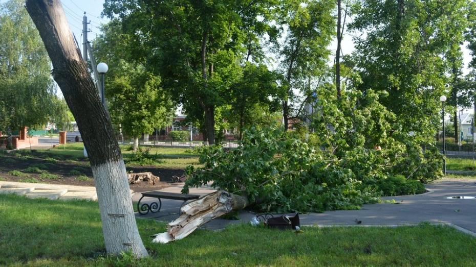 В Нижнедевицке ночной ураган поломал деревья и оборвал провода